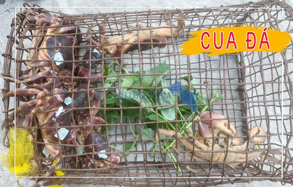 Đặc sản Cua Đá Cù Lao Chàm
