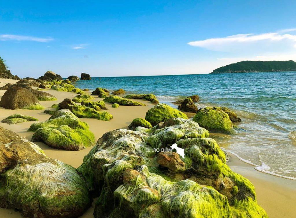 Rêu xanh mọc trên các mõm đá đảo Cù Lao Chàm