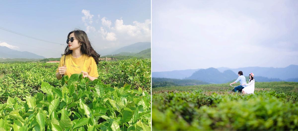 Đồi chè Đông Giang, Quảng Nam